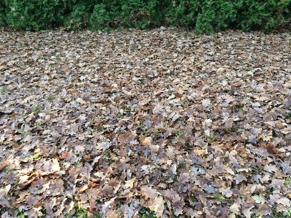 sprzątanie ogrodów Warszawa