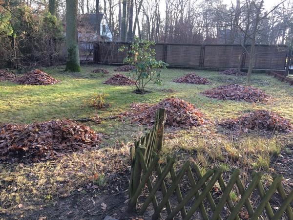 sprzątanie terenów zielonych Warszawa